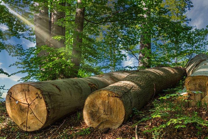 tree-trunks-5151723__480